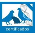 Genotipado y Filiación PALOMAS con certificados (