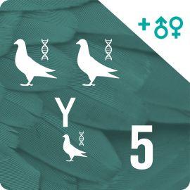 BONO DE 5. Genotipado y filiación (15 palomas)
