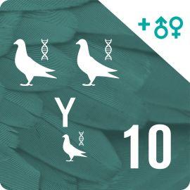 BONO DE 10. Genotipado y filiación (30 palomas)