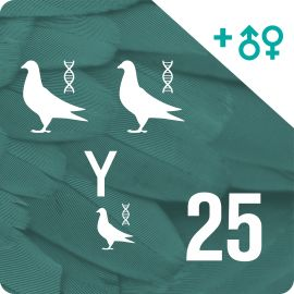 Pack of 25 DNA profiling and parentage testing (3 pigeons)