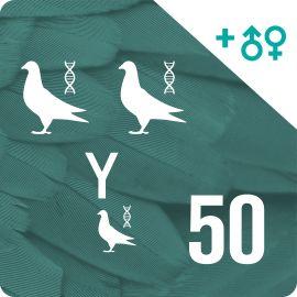 BONO 50. Genotipado y filiación (150 palomas)
