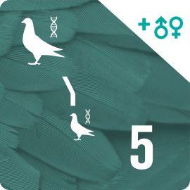 BONO 5. Genotipado y filiación (10 palomas)