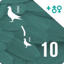 BONO 10. Genotipado y filiación (20 palomas)