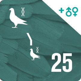 Pack of 25 DNA profiling and parentage testing (2 pigeons)