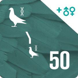 BONO 50. Genotipado y filiación (100 palomas)
