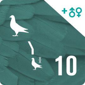 BONO 10. Genotipado y filiación (10 palomas)
