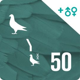 BONO 50. Genotipado y filiación (50 palomas)