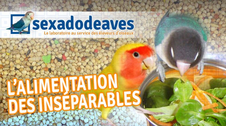 alimentation inseparables