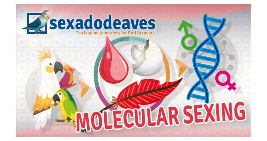 ¿Cómo se realiza el Sexado por ADN?