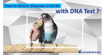 Detection Of Bird Disease With Dna Test, How Does It Work?