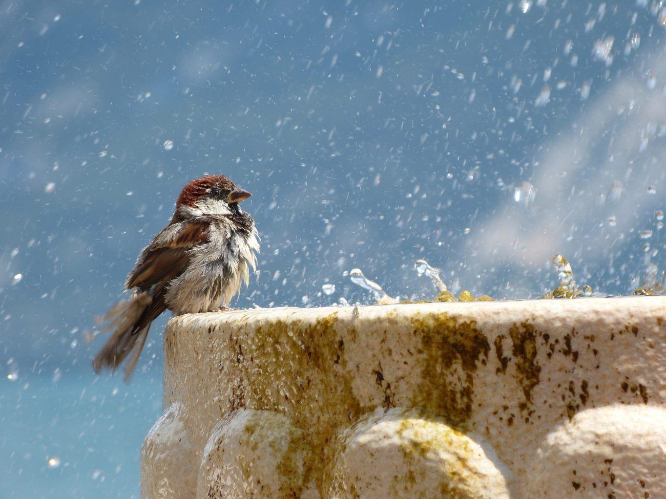 Prendre soin de vos oiseaux en été