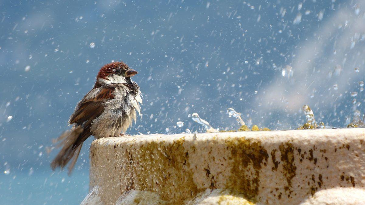Cuida a tus aves en verano