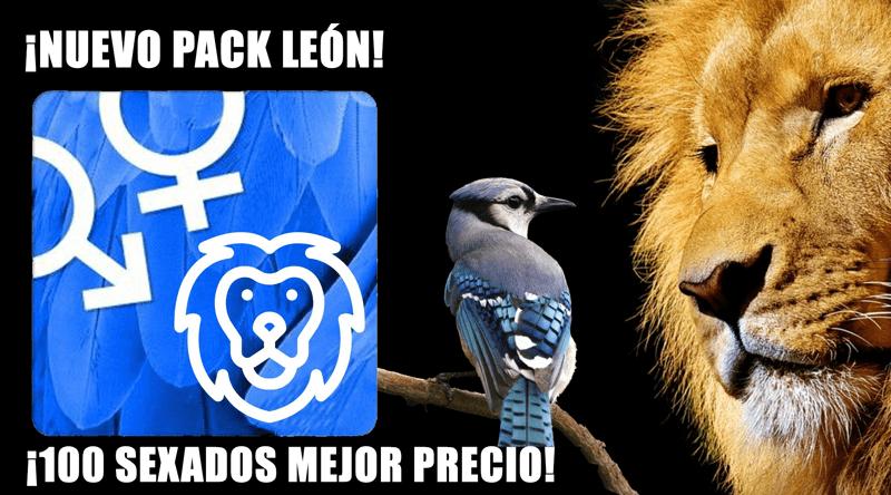 ¡Nuevo Pack León!