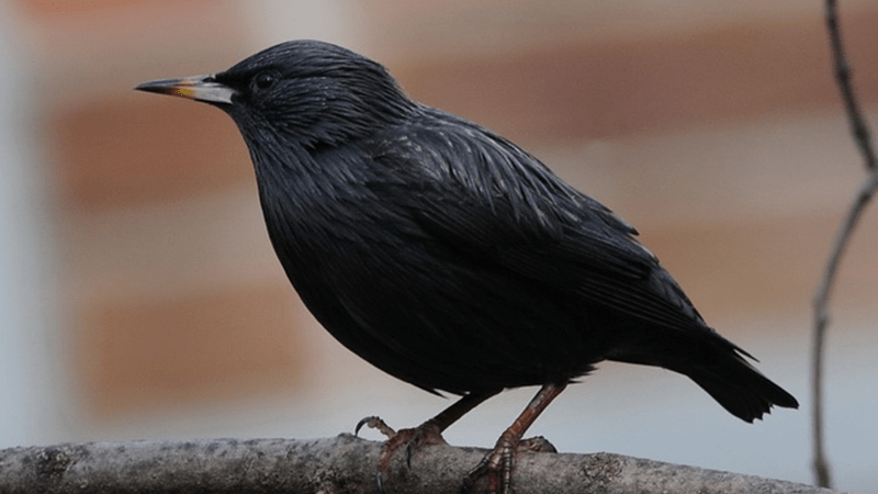 The Most Common Birds