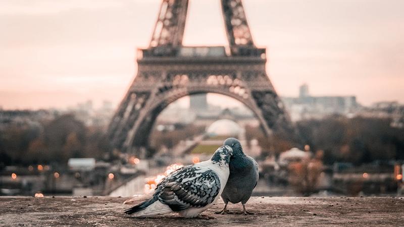 aves más comunes en la ciudad de parís