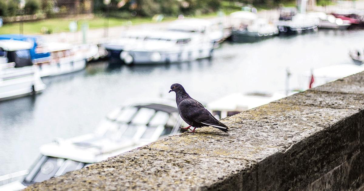 aves más comunes en la ciudad