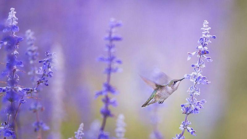 Top 9 des oiseaux les plus petits du monde