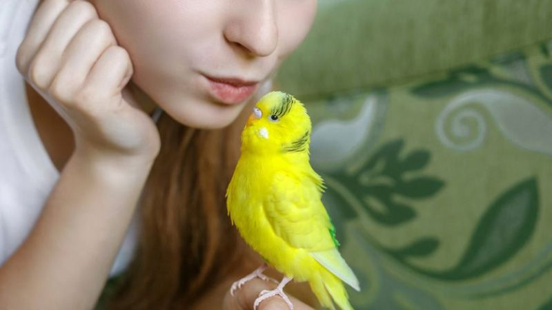 conseils pour choisir oiseau