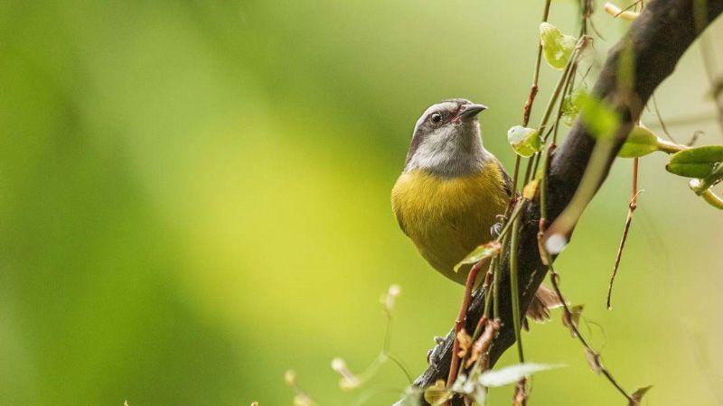 aves más pequeñas del mundo