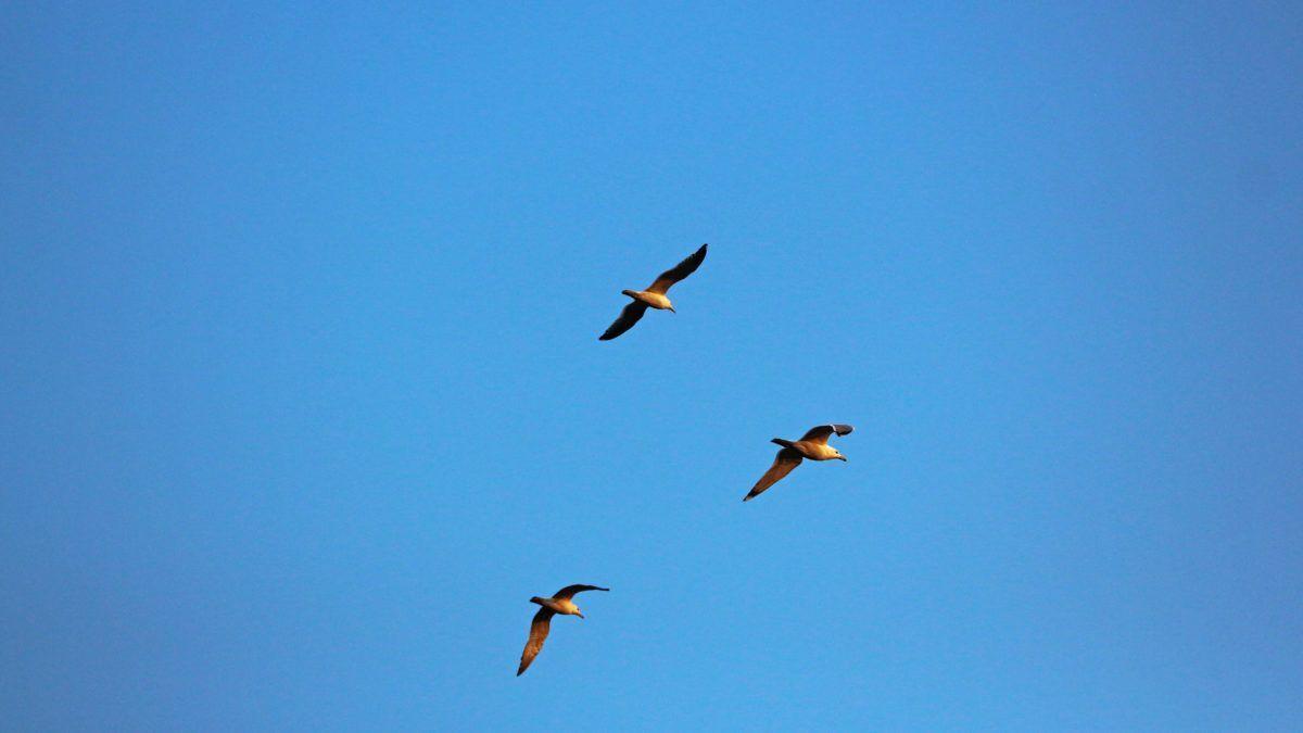 Aves más comunes de España
