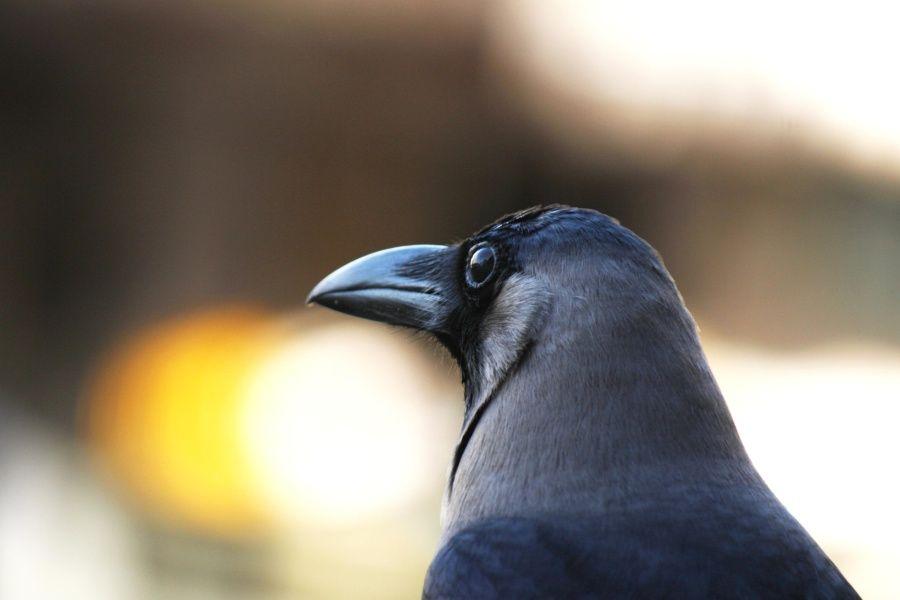 El ave más inteligente del mundo