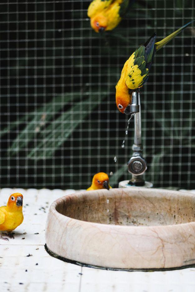 Cómo cuidar de tus aves en verano