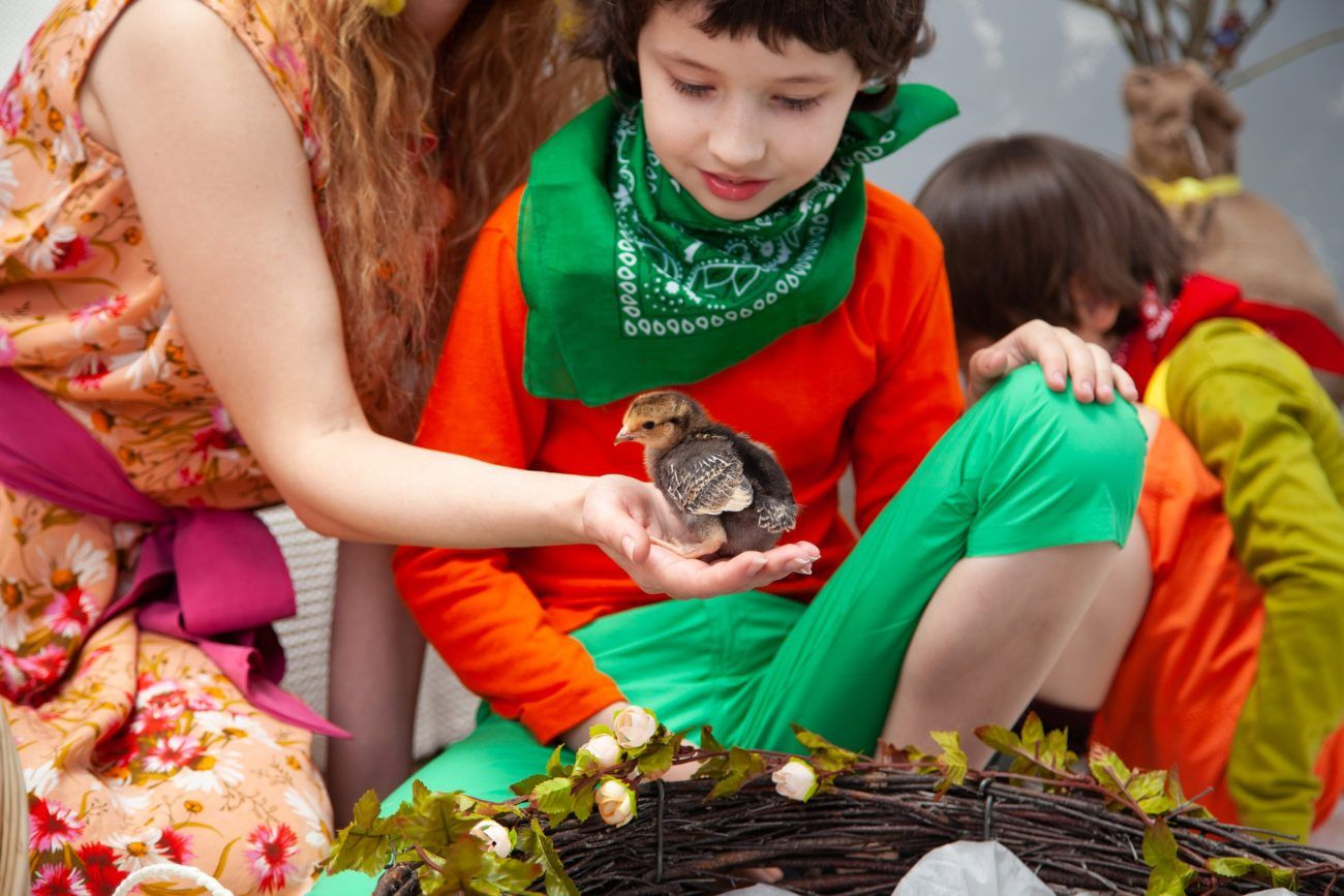 Aves y niños ¿Es seguro para nuestros hijos?
