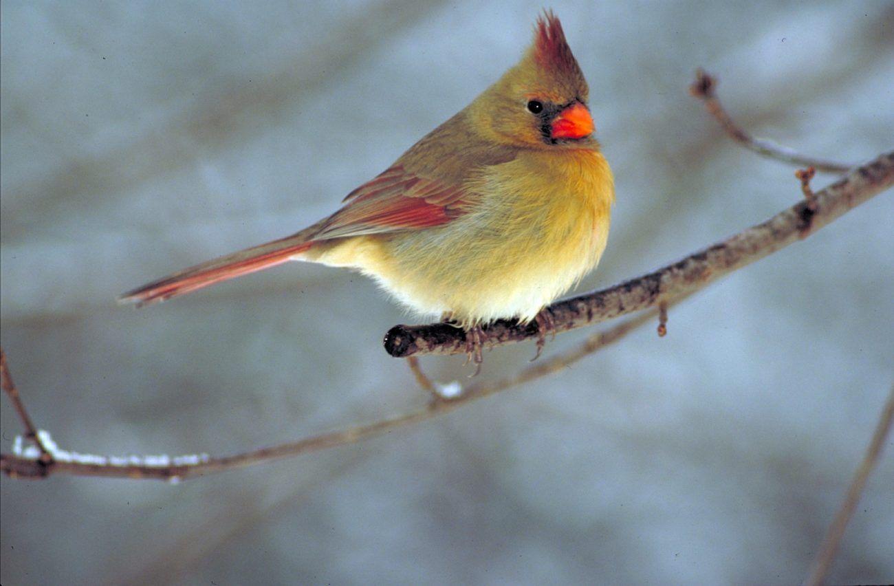 Las aves más caras de la historia