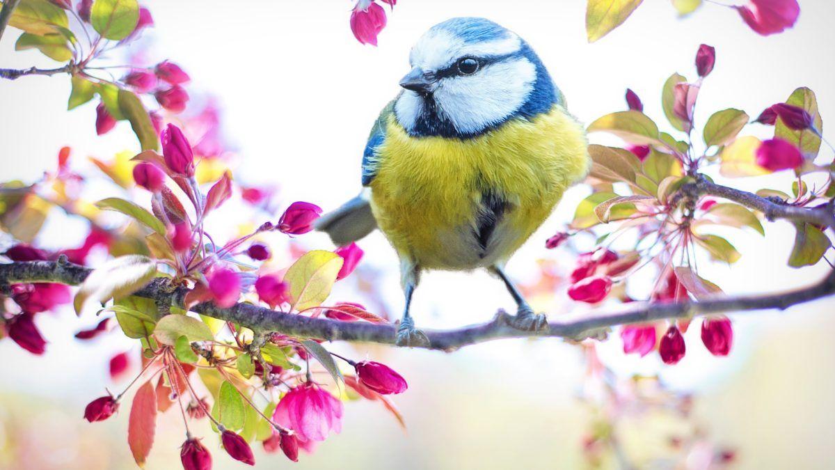 logos sobre aves
