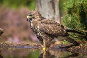 Aves en la Laguna de Ruideras