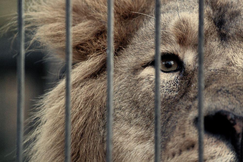Le travail important des zoos