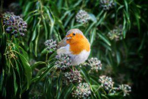 Aves más comunes en Europa