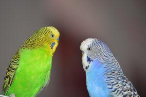 Aves más comunes en Oceanía