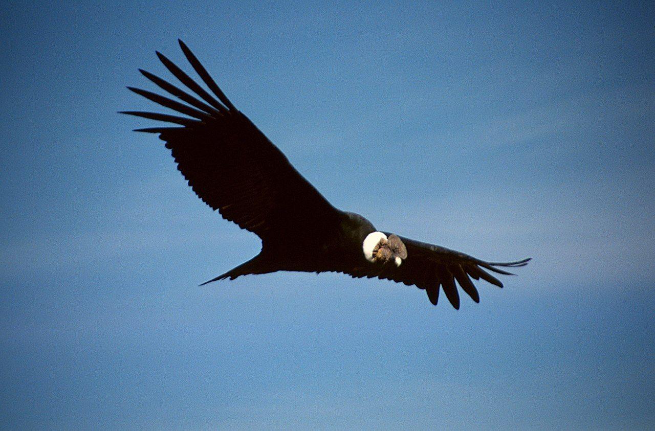 aves mas comunes de américa