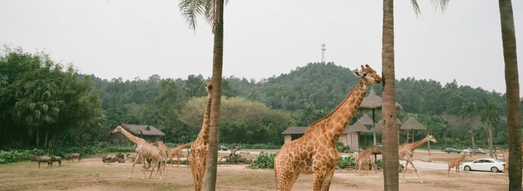 La importante labor de los zoológicos