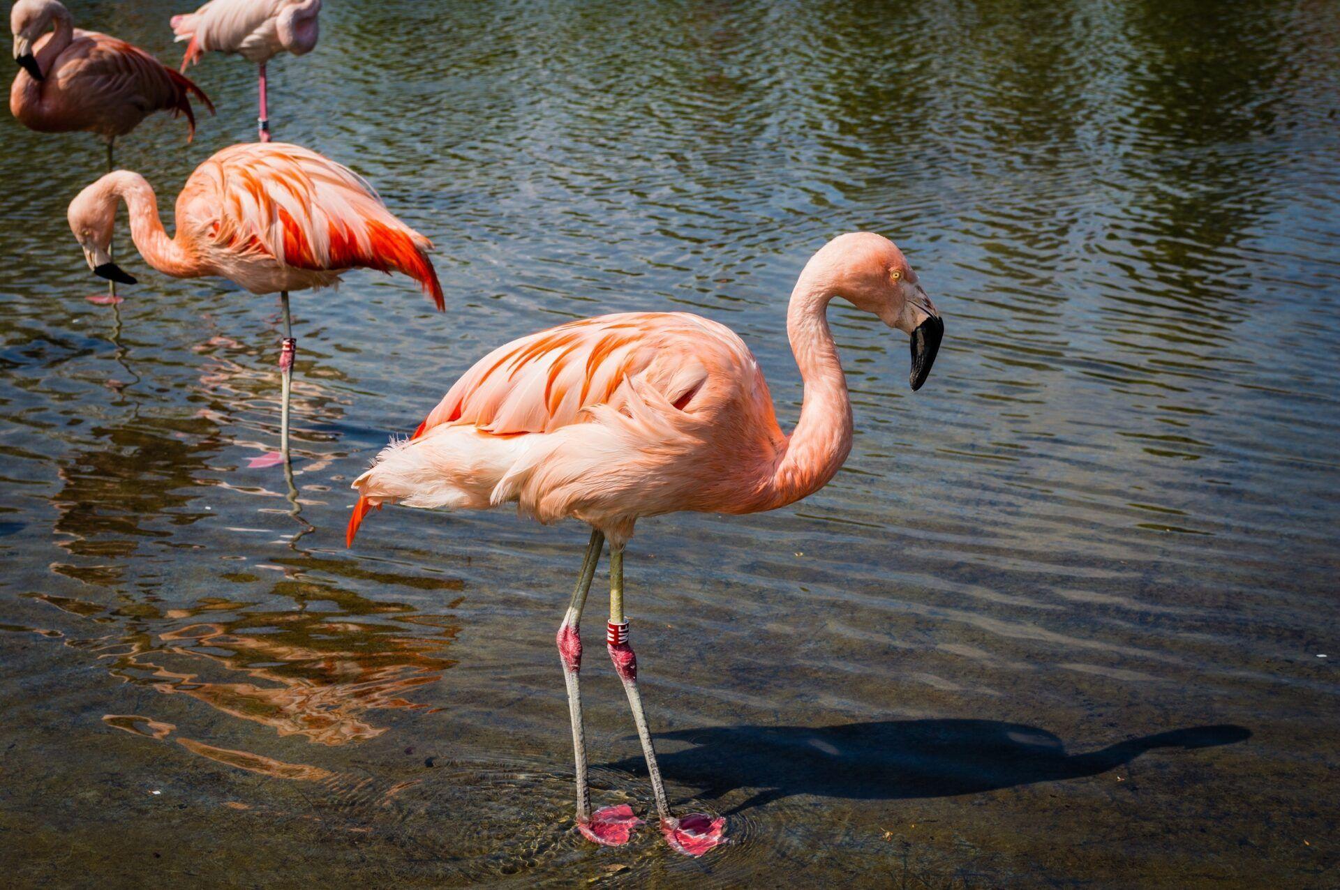 Aves más comunes en América