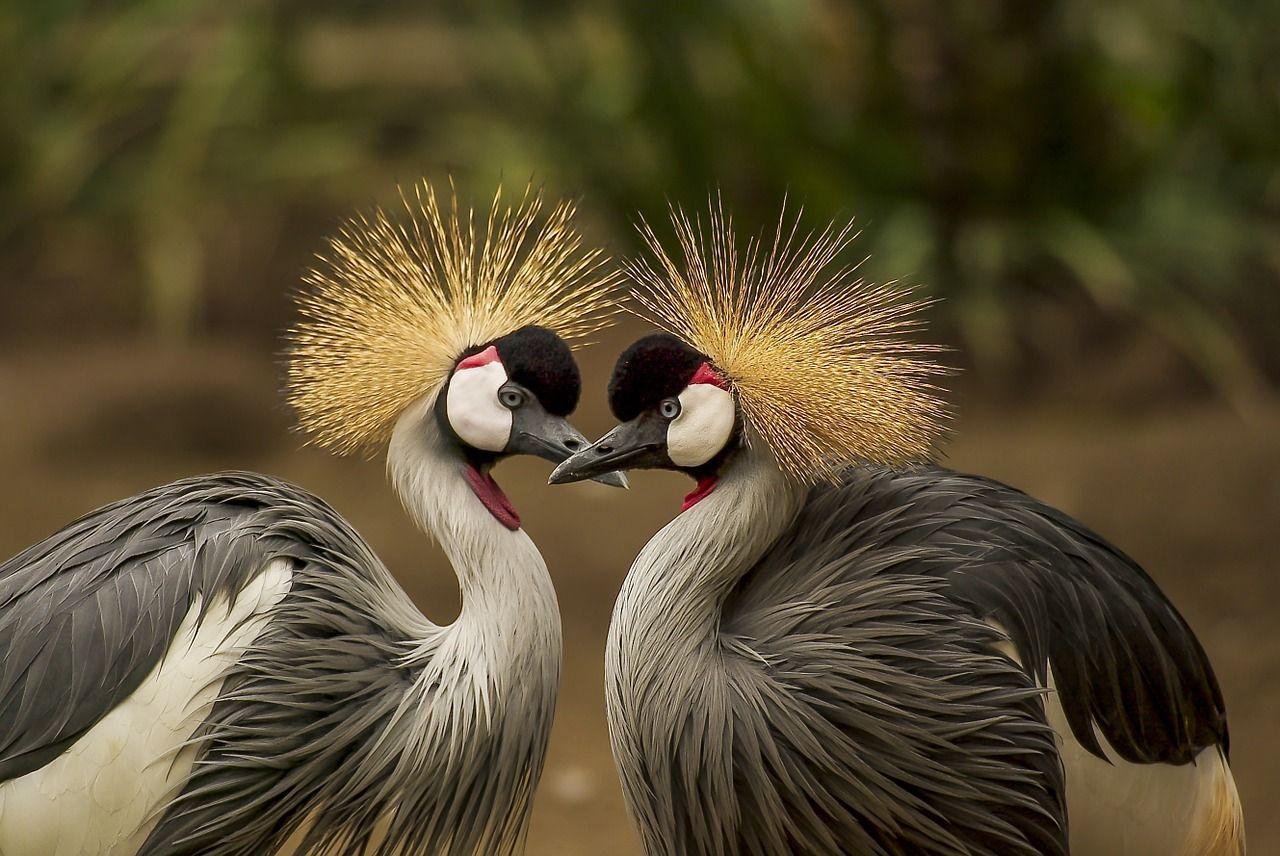 beneficios de sexar aves