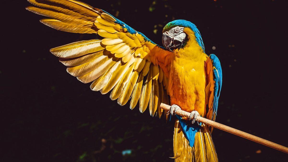 Ave-el-color-de-las-plumas
