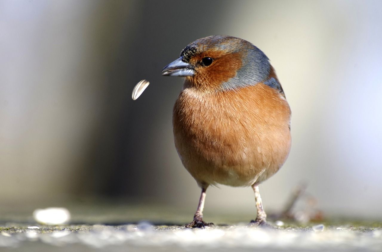 aves más glotonas