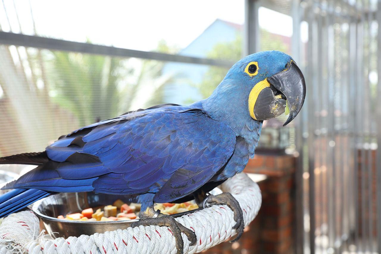 Aves ,ás raras del mundo