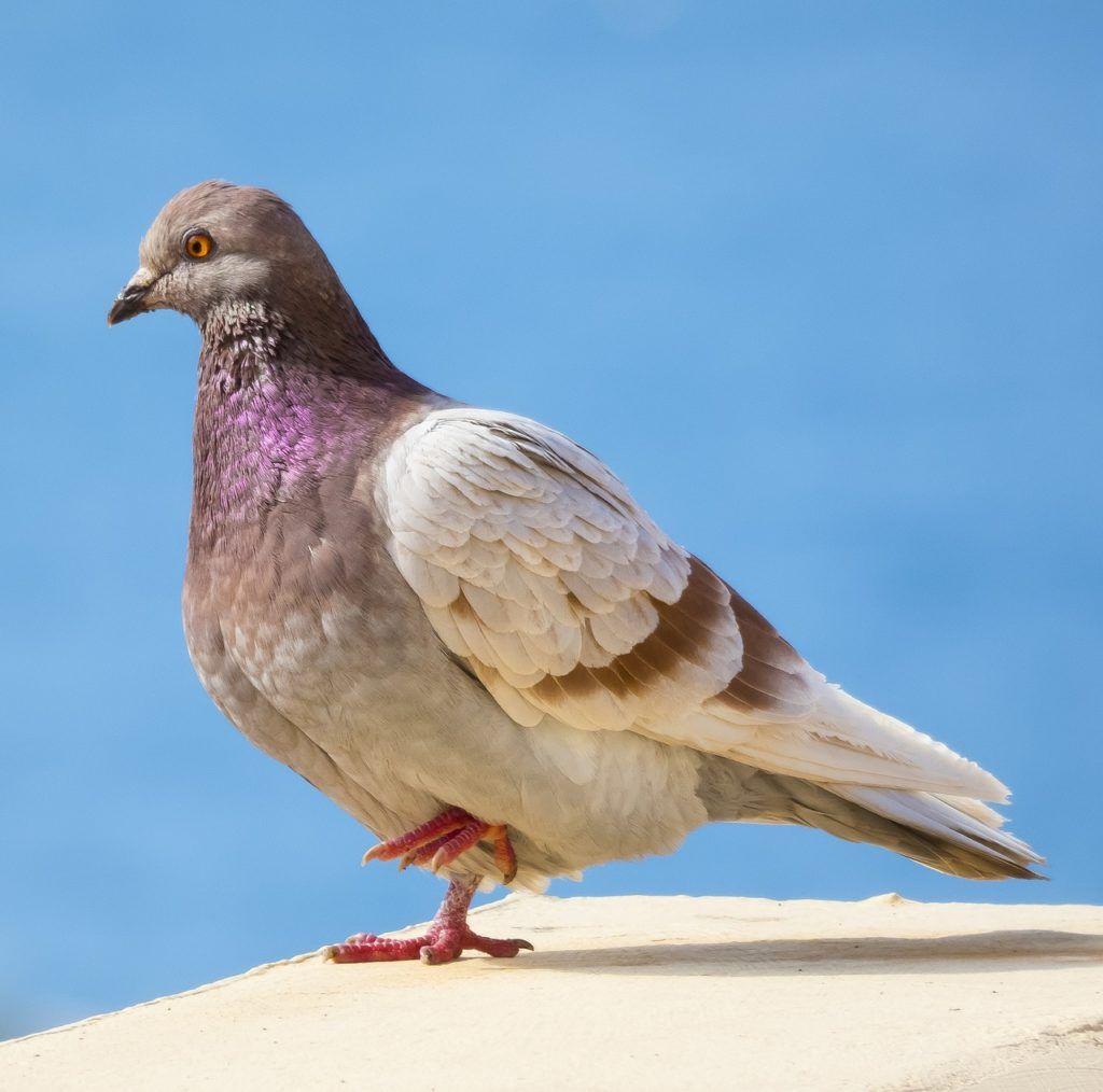 Patrones de colores en aves