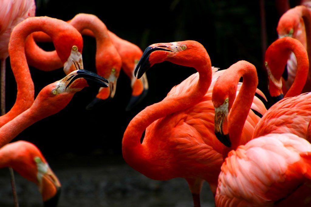 De qué depende el color de las plumas