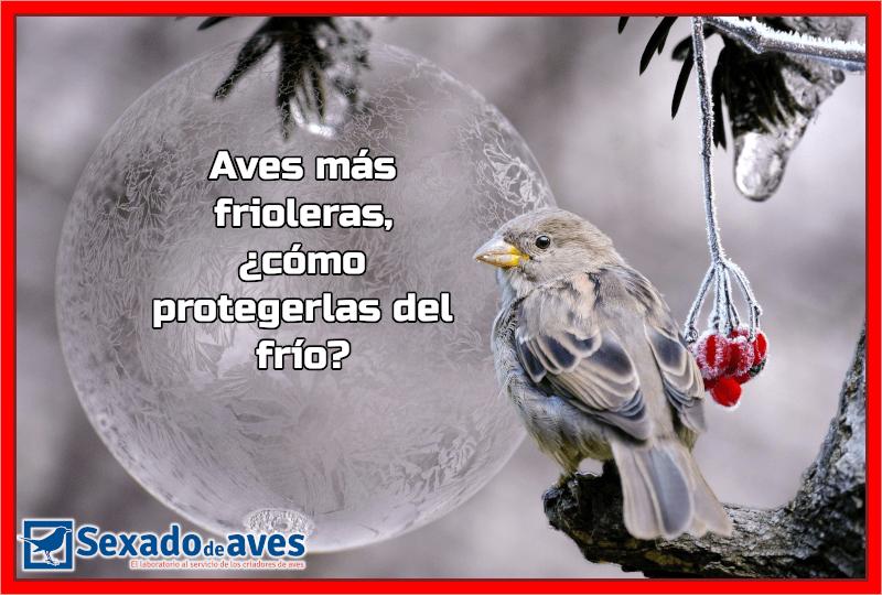 Aves más frioleras, ¿cómo protegerlas del frío?