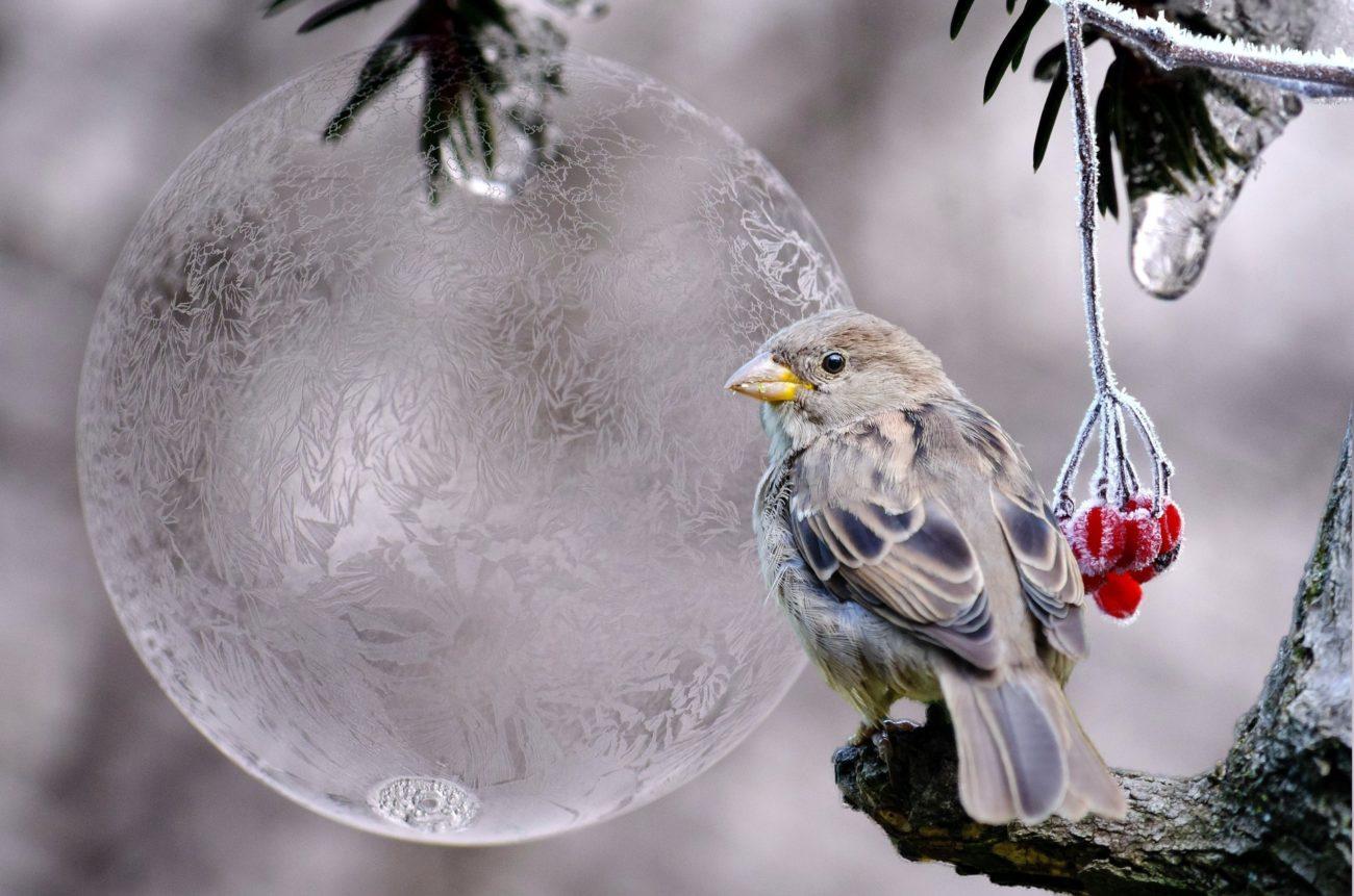 aves más frioleras
