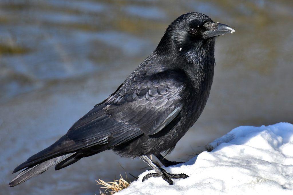 Aves más populares en los zoológicos