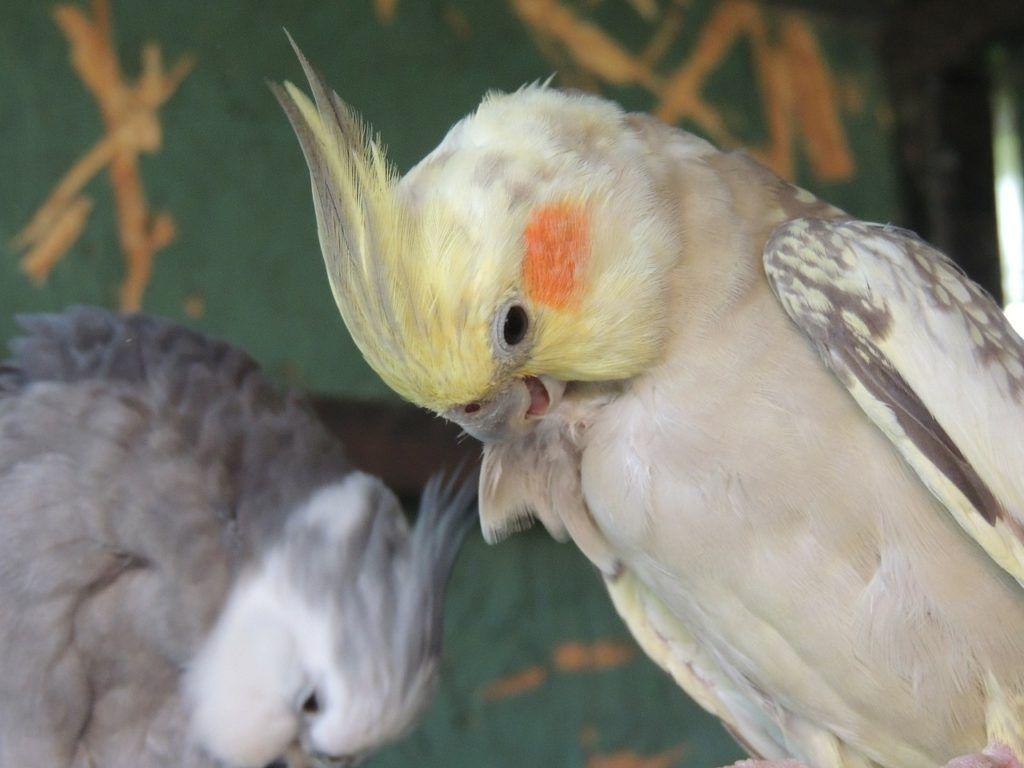 Principales necesidades de las aves