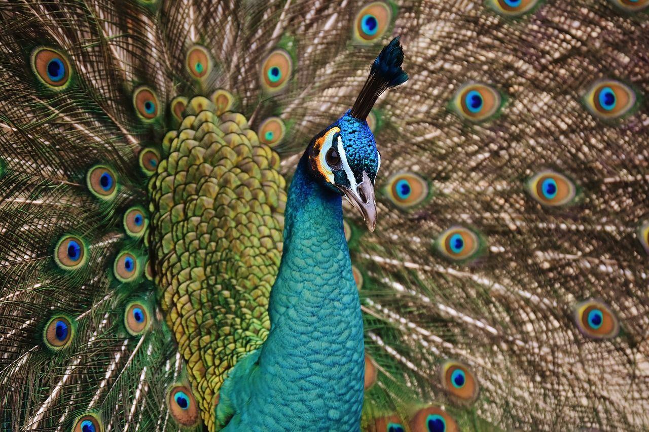 Aves-mas-populares-en-los-zoologicos