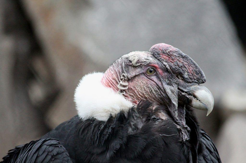 Cómo afecta el declive del entorno natural en las aves