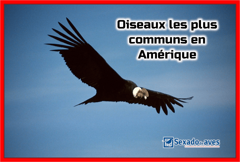 Oiseaux les plus communs en Amérique