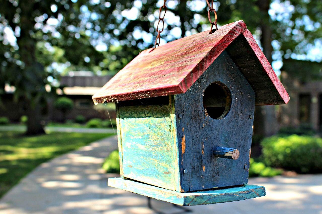 Cuidados básicos para tener un ave en casa